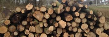 Meer dan 200 bomen gekapt